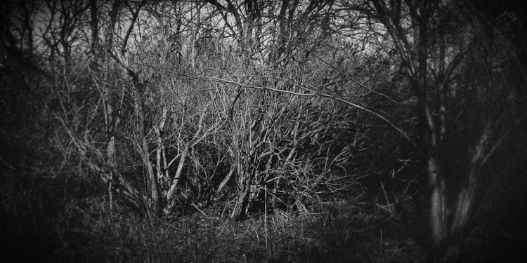 Bill Vaccaro • Chicago, Il. • The Hedge • Ziatype from handmade silver bromide