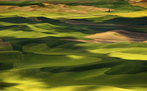 Afternoon in the Palouse